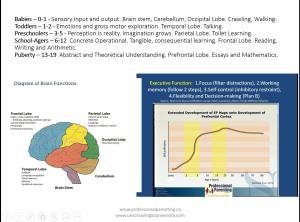 Developing Brain